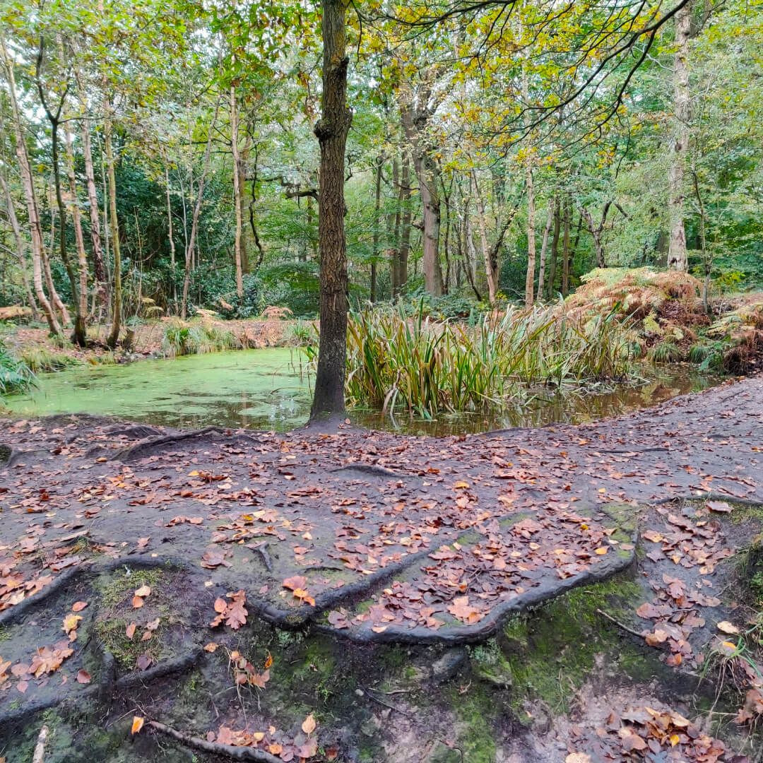 Meanwood Valley Local Nature Reserve pond in Adel Woods