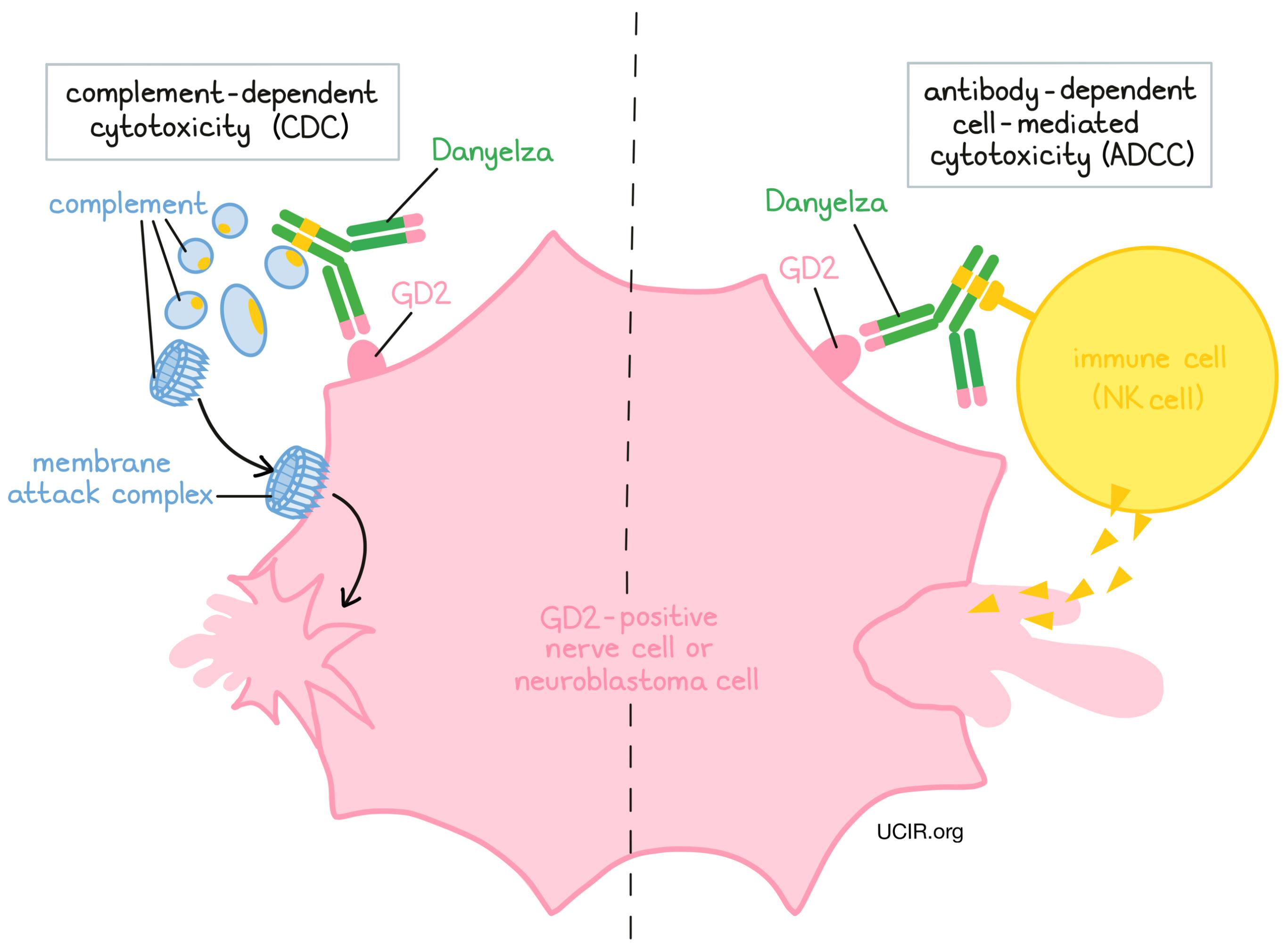 Illustration showing how Danyelza works