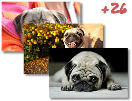 Pug theme pack