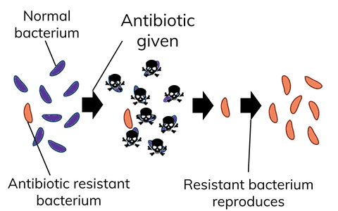 Process of Antibiotic Resistance