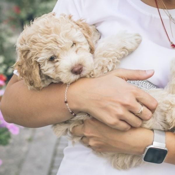 What CBD Oil Is Good For Dogs?