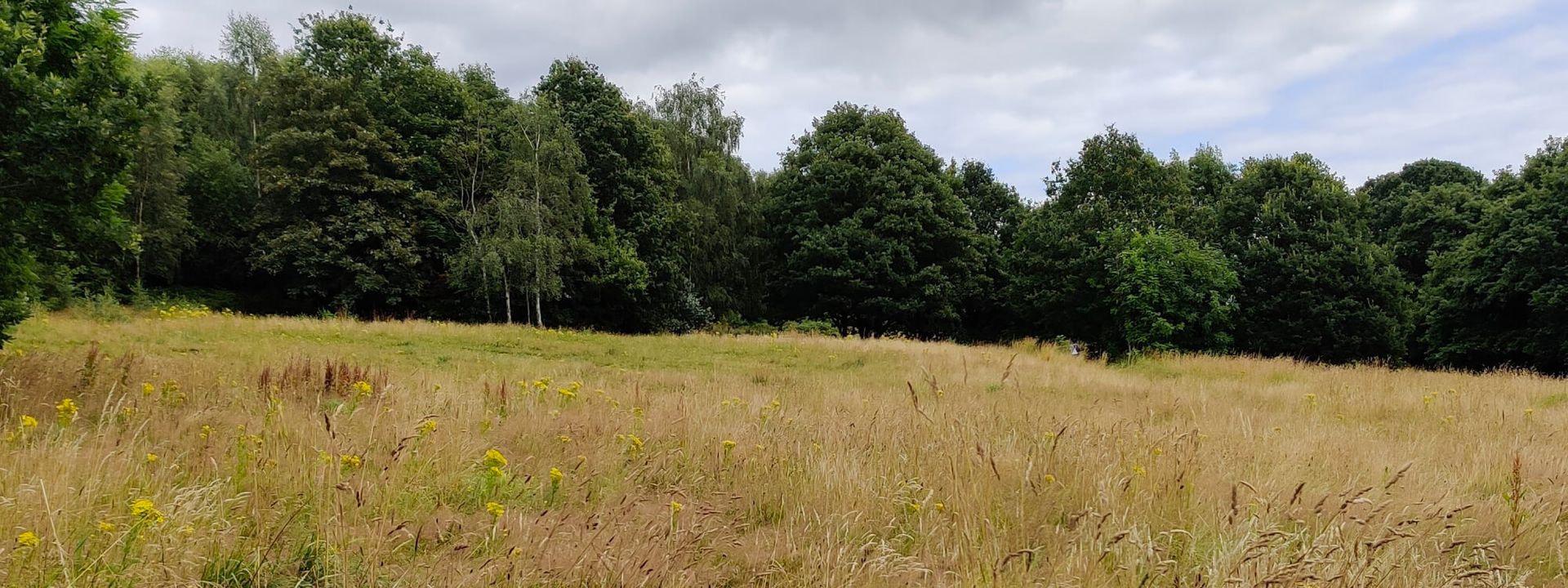 Sugarwell Hill Park wild flower meadow
