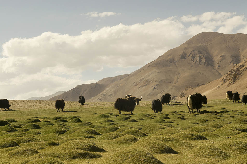 Himalayas Have a Deep Impact on the Climate of the World