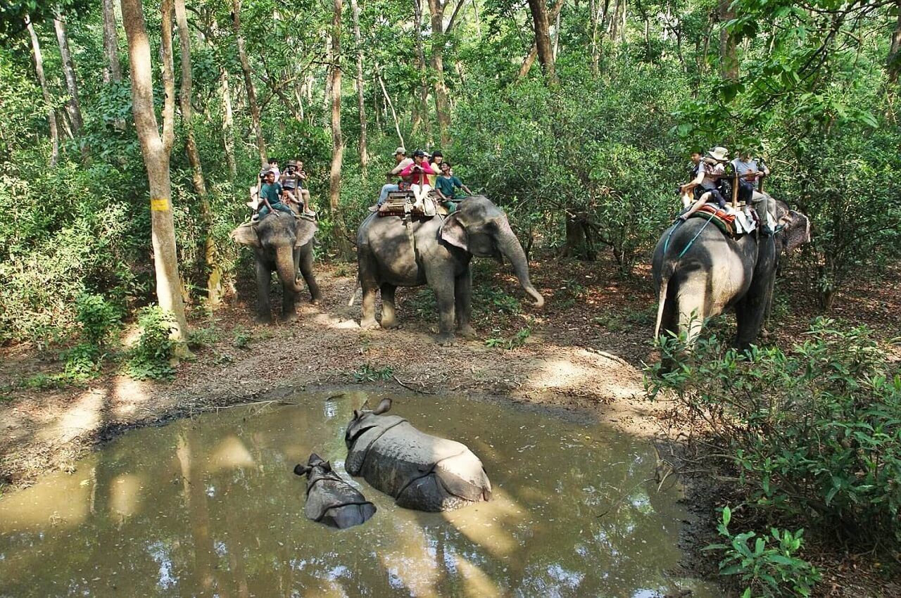 Jungle Safari in Chitwan National Park - Rhinos and Elephants
