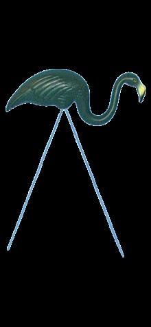Green Flamingo photo