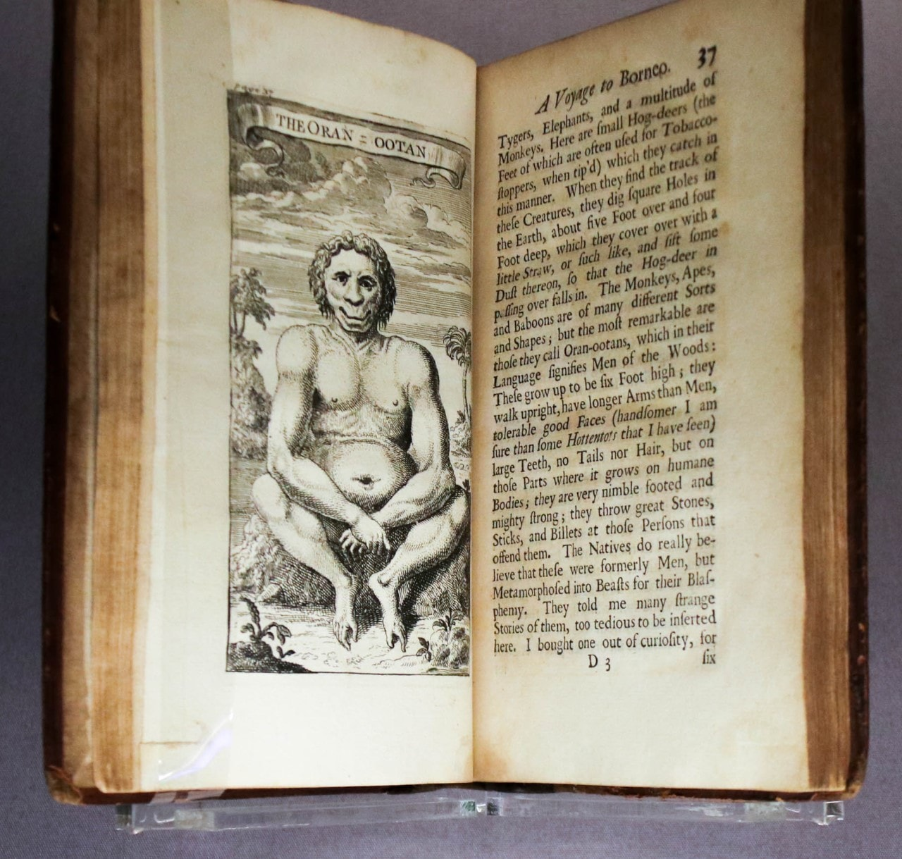 An open book, with a black and white illustration of an orangutan on the left page. It sits on a rock facing the reader, and it looks more human than ape.