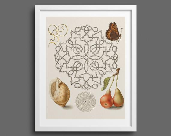 Butterfly, Pears and Mollusc