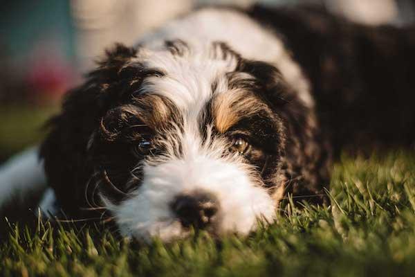Was braucht mein Hund im Welpenalter