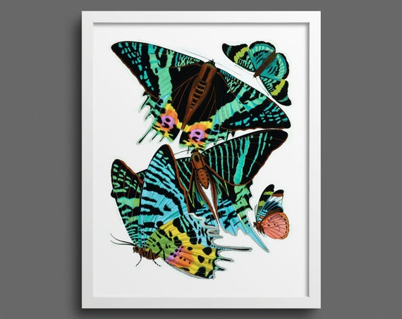 Papillons by EA Seguy - plate 7
