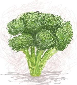 Broccoli Sketch