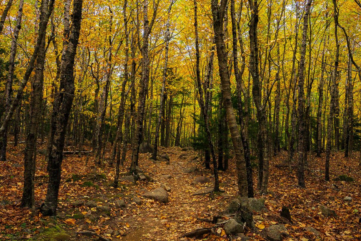 Acadia Aspens Path