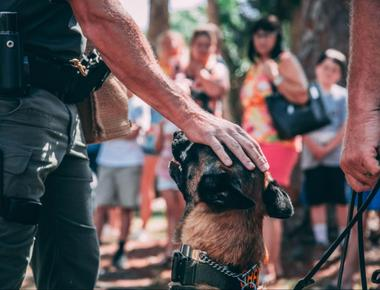 Police Dogs: What Makes a Dog a Good Police Dog?
