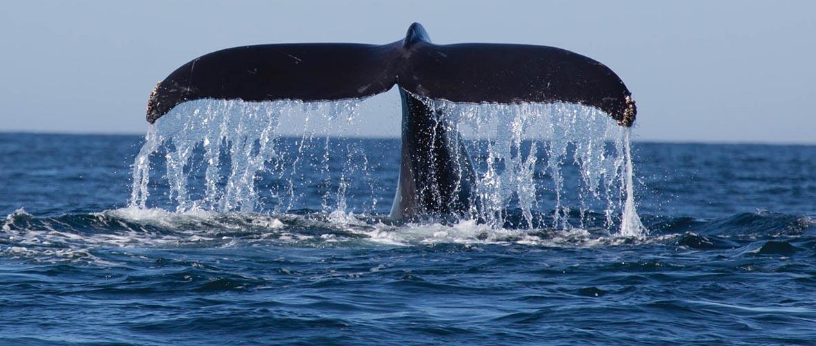 Activities Lofoten Anker Brygge Whale Safari