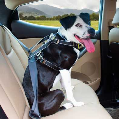 Why You Need to Restrain Your Dog in the Car
