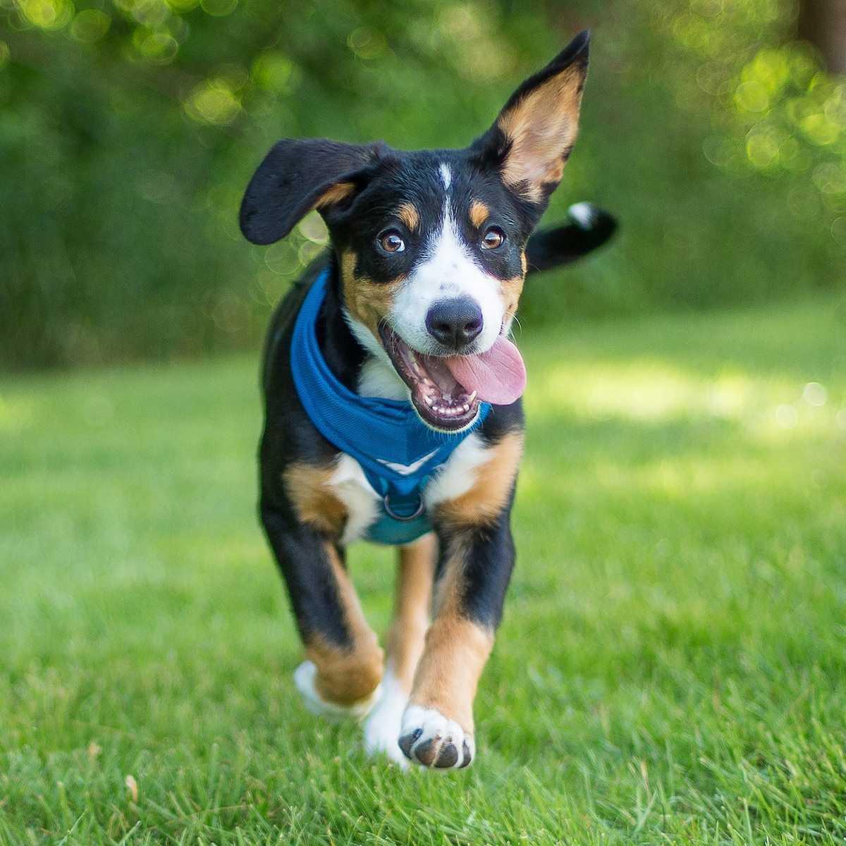 The Printable New Dog Checklist