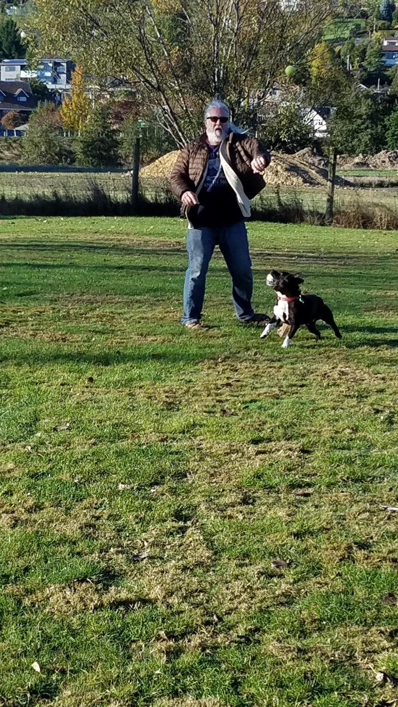 Dog park ball fun