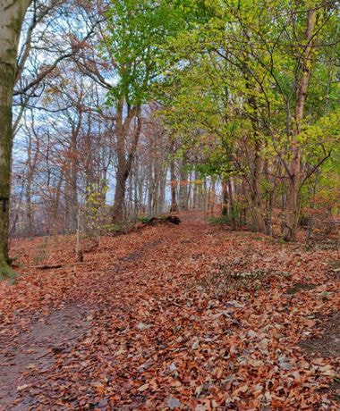 Batcliffe Woods in Autumn