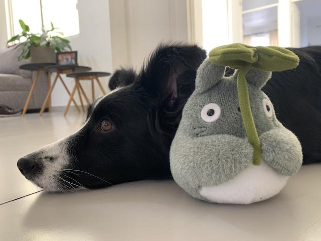 Nina acostada al lado de un peluche de Totoro