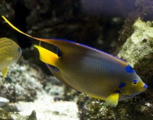 Diseases That You Might Face If You Own a Fish