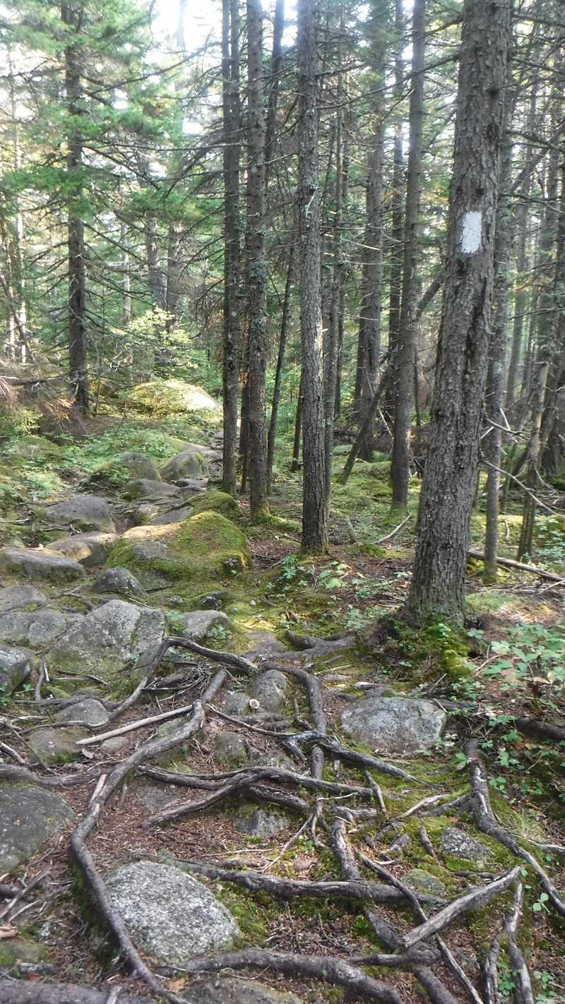 Rocks and roots on descent from Bemis Mountain Second Peak