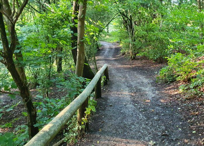 Footpath through Nan Whins Wood