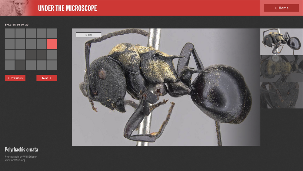 Screenshot of the ant interactive