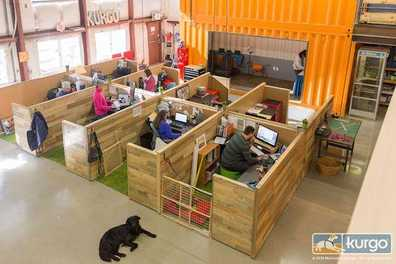 Tips For Creating a Dog-Friendly Office