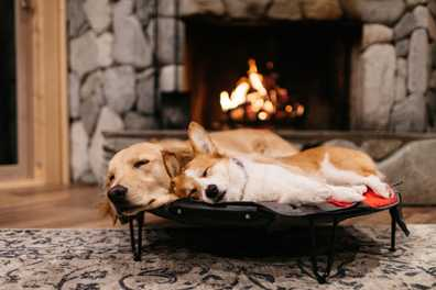 Experts: COVID-19 is not transmissible between people and pets