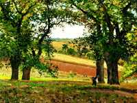 'Chestnut trees at osny' by Camille Pissarro, 1873 currently in private collection