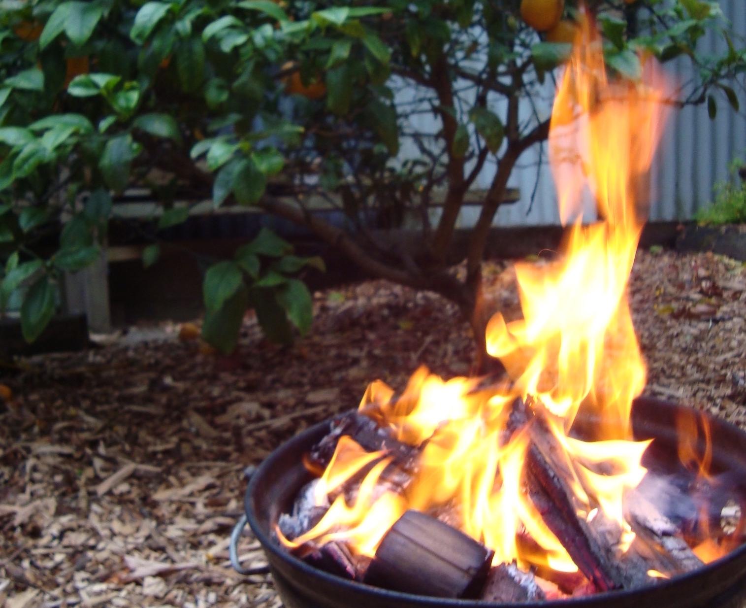 NZ summer BBQ in the Auckland back garden.