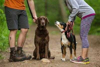 Why and How Positive Dog Training Works