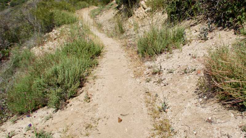 Butterflies swarm on the PCT