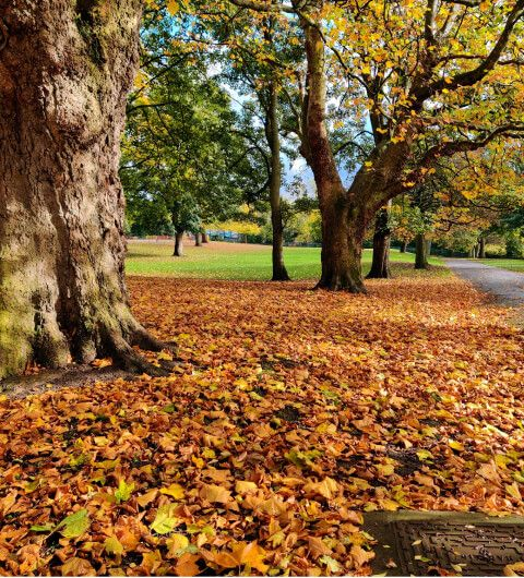 Orange leaves on the ground under a tree in Burley Park