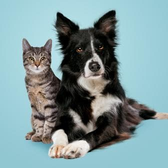 Dog next to a cat