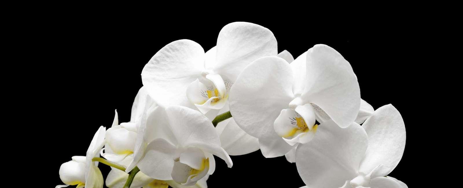 Cum protejam florile la temperaturi ridicate