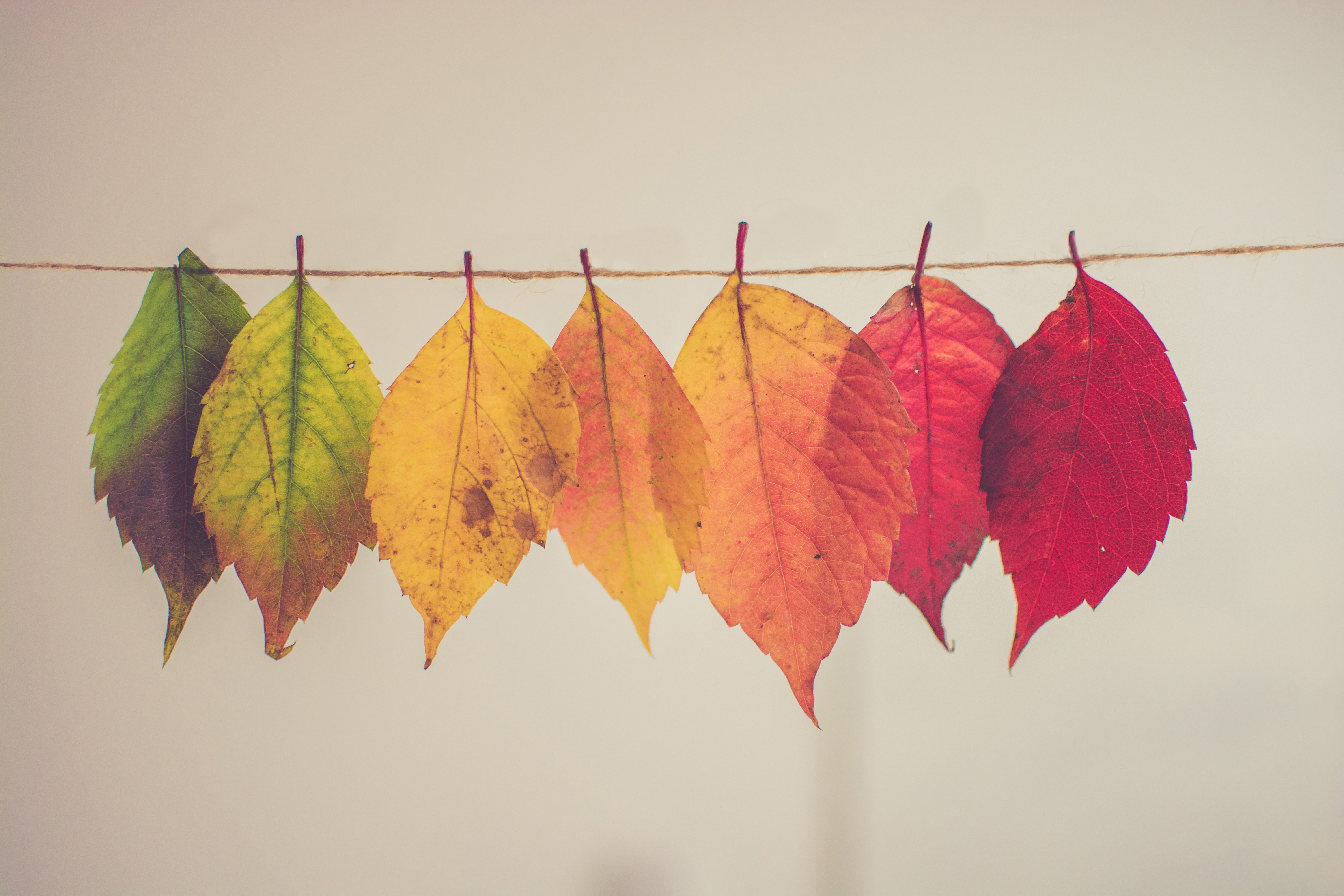 multi-colored leaves on a white background