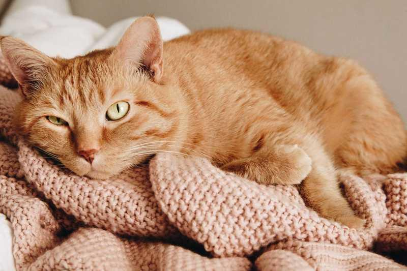 Medical Cannabis For Cats