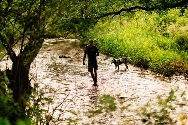 A person walking with their dog in the shallow stream.