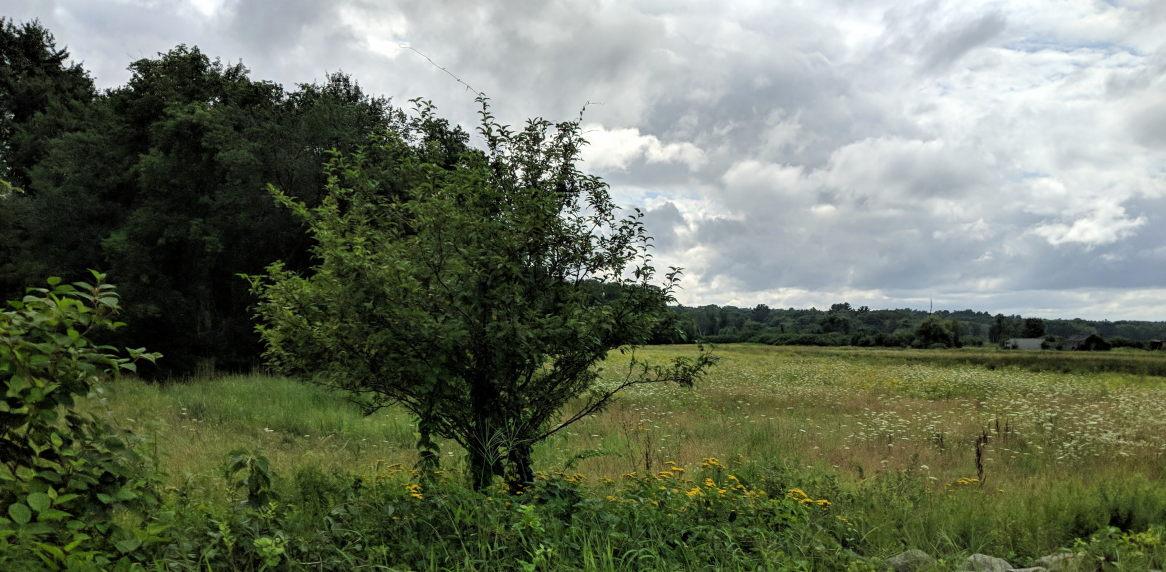 Field in Concord, MA