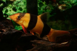 About Tropical Fish breeding