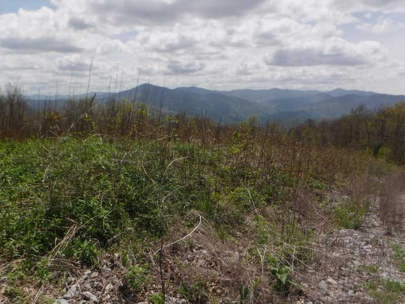 View from Snowbird Mountain