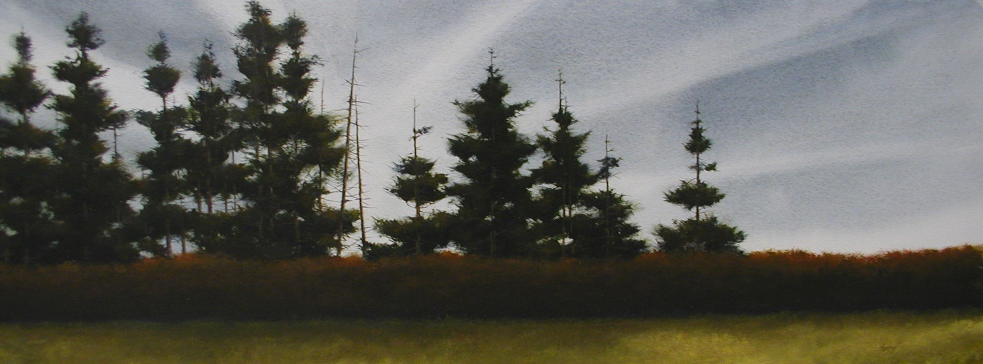 tall pines in the backgound