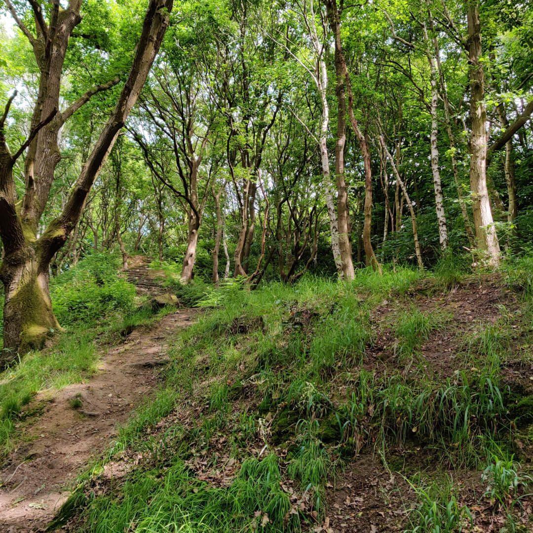 Hawksworth Wood steps