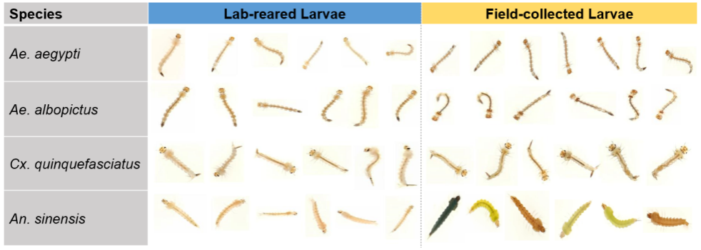 Lab-reared larvae vs. Field-collected larvae