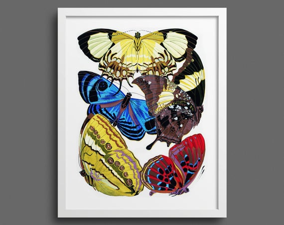 Papillons by EA Seguy - plate 4