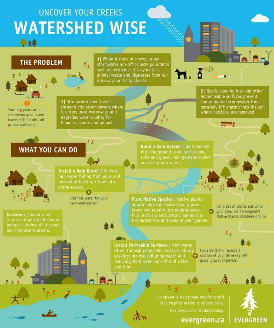Water Wise Infographic