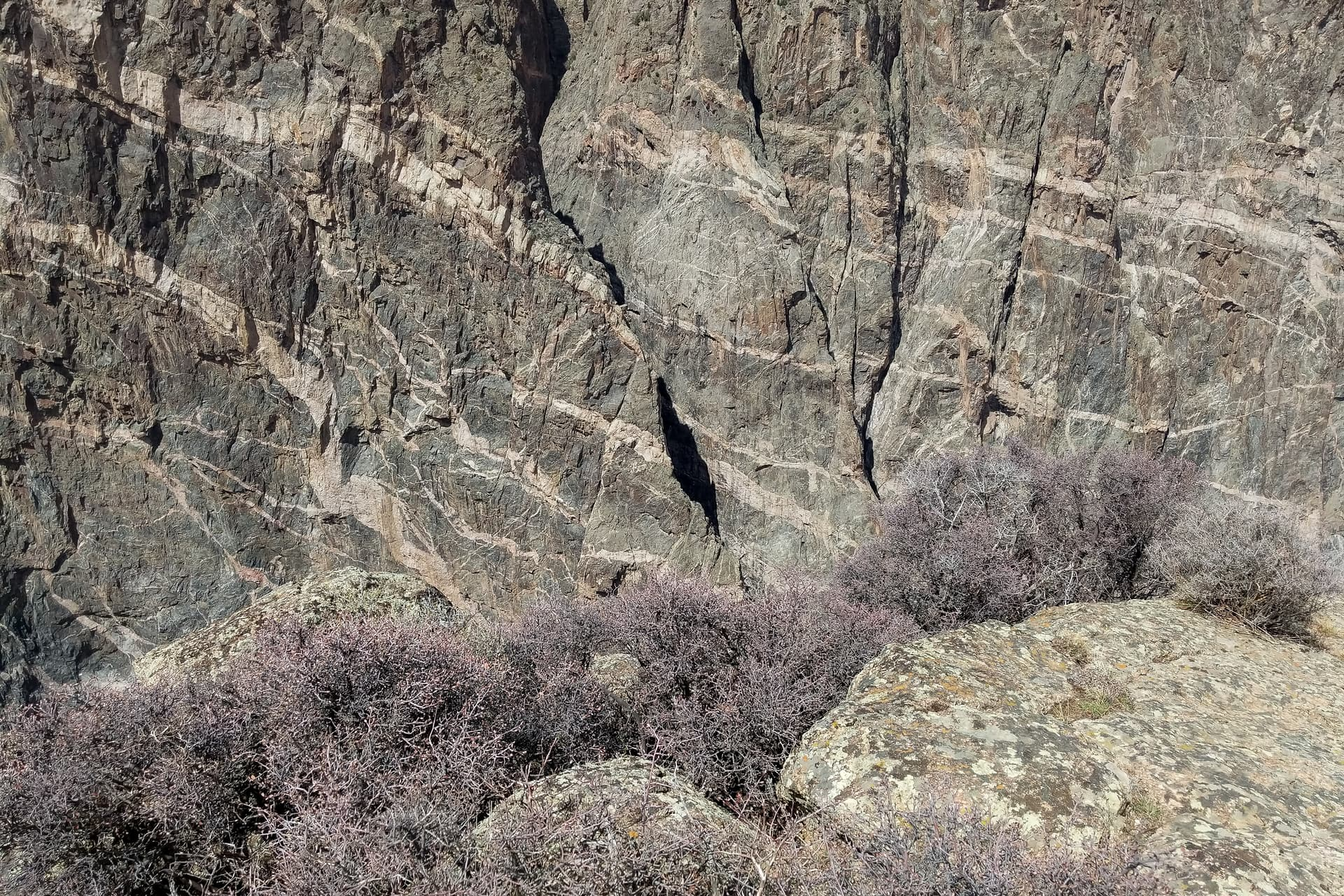 The wall of the deep purple rock of the Black Canyon of the Gunnison, shot through with intrusions of white granite. In the foreground is a row of low desert bushes covered in soft pink buds.
