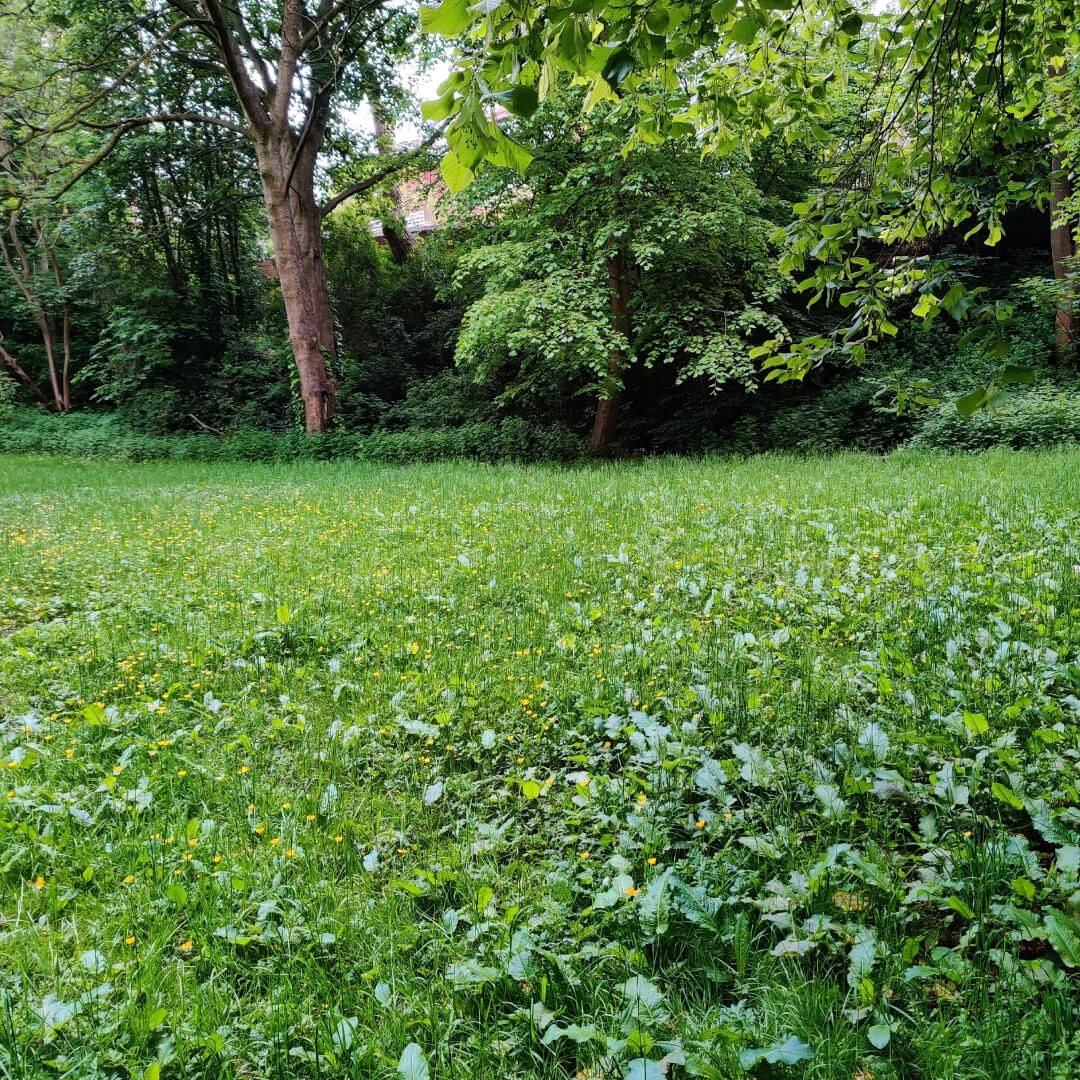 Woodhouse Ridge grass