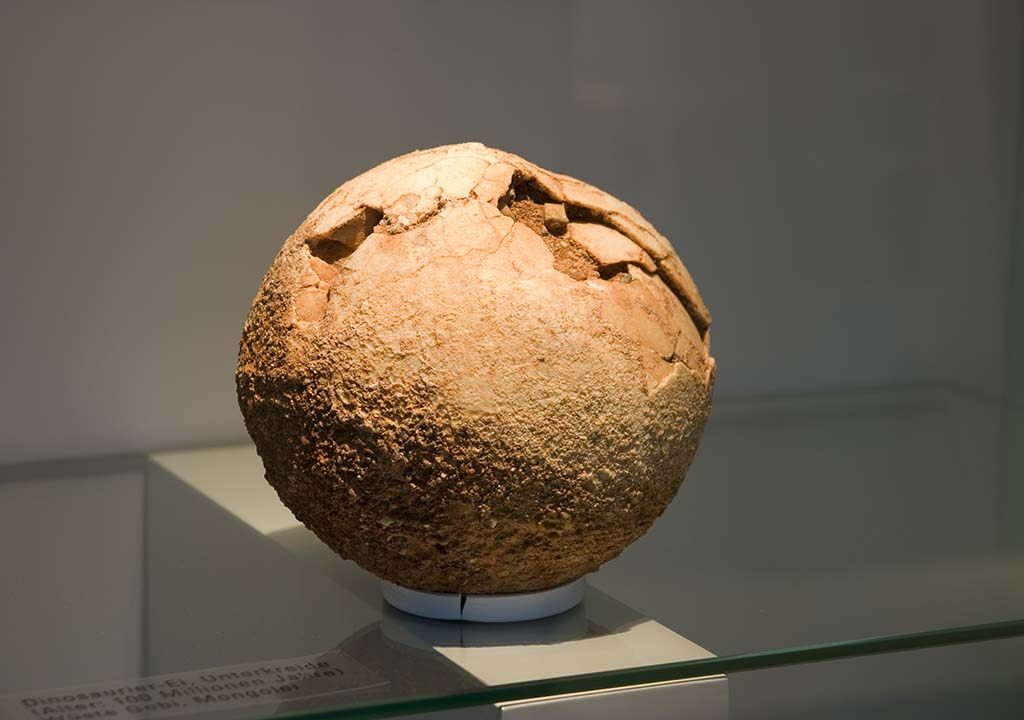Close to 100 million years old dinosaur egg. Displayed at University of Zurich.