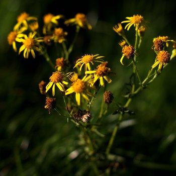 Yellow 1622